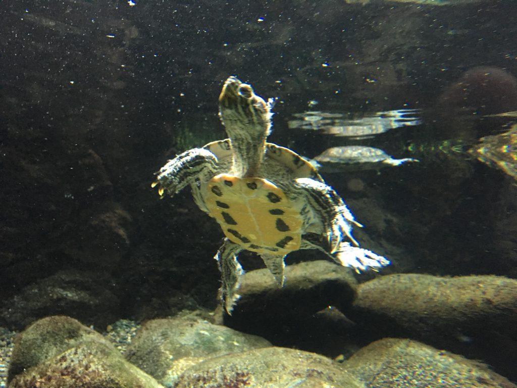 井の頭自然文化園は、動物園・水族館・遊園地・彫刻園が楽しめる多彩な動物園