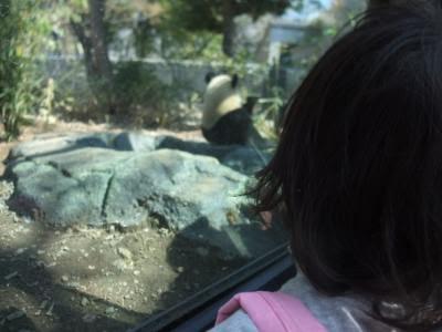 上野動物園のジャイアントパンダ「シンシン」日本初上陸2011年4月1日