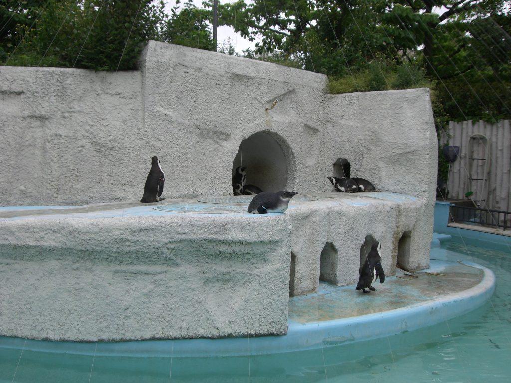上野動物園のペンギン