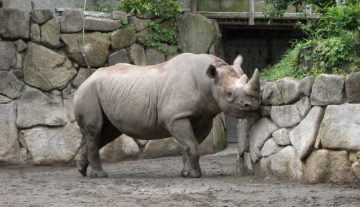 【ぐるっとパス2019】動物園や水族館は、子連れにもデートにもおすすめ!お得に楽しもう!