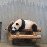上野動物園のパンダ「リンリン」「シンシン」
