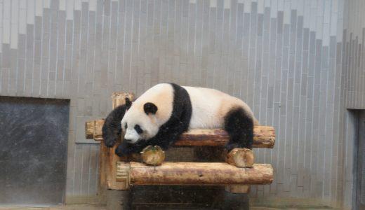 【ぐるっとパス2019】上野動物園でパンダやゴリラ、たくさんの動物を楽しもう!