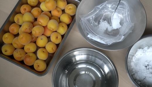 【ジッパー袋で簡単梅干し作り】塩と梅を袋に入れてゆするだけ!?梅漬け編